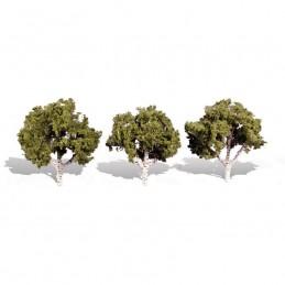 WTR3534  CLASSICS TREES-...
