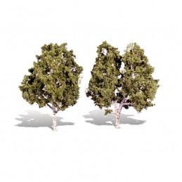 WTR3536  CLASSICS TREES-...